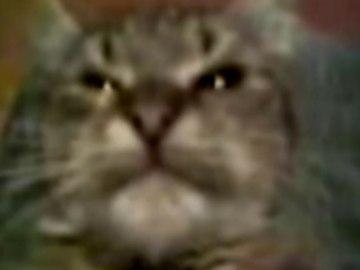 Кітти мамумав