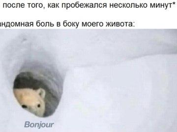 Медведь Бонжур