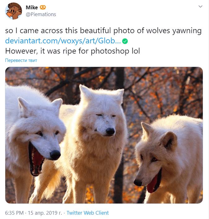 Волки смеются