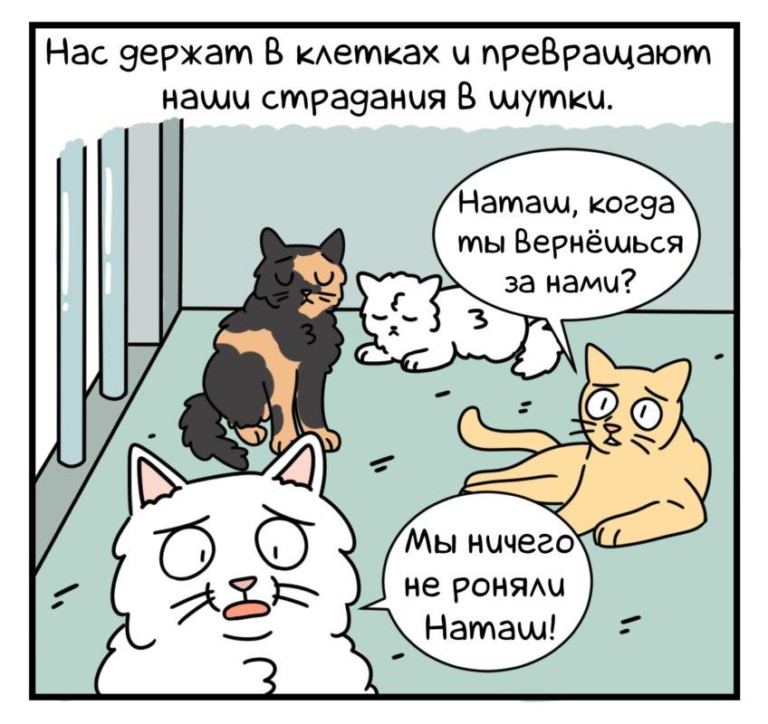 о тяжелой жизни мемных животных