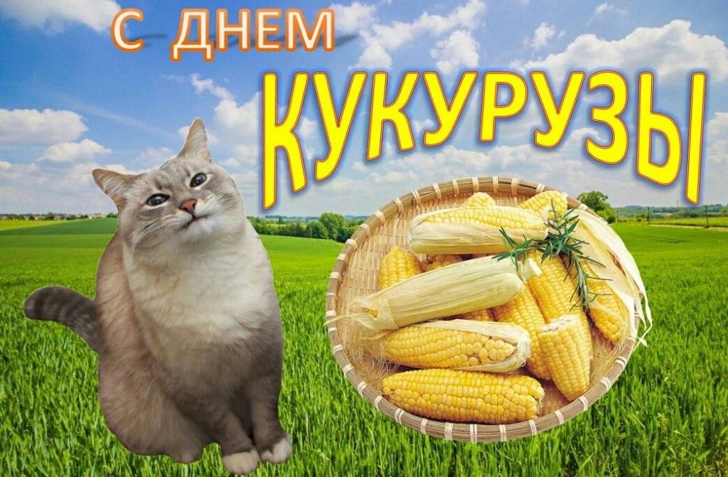 день кукурузы мем