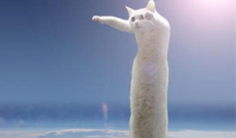 В Японии умер кот Нобико. Вы знаете его по мему Длиннокот