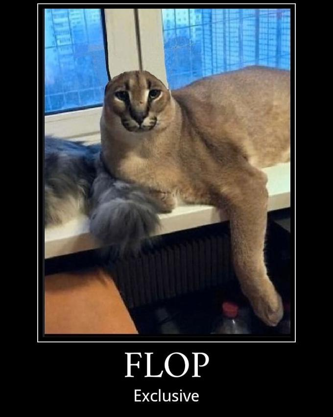 Большой шлёпа (Big Floppa)