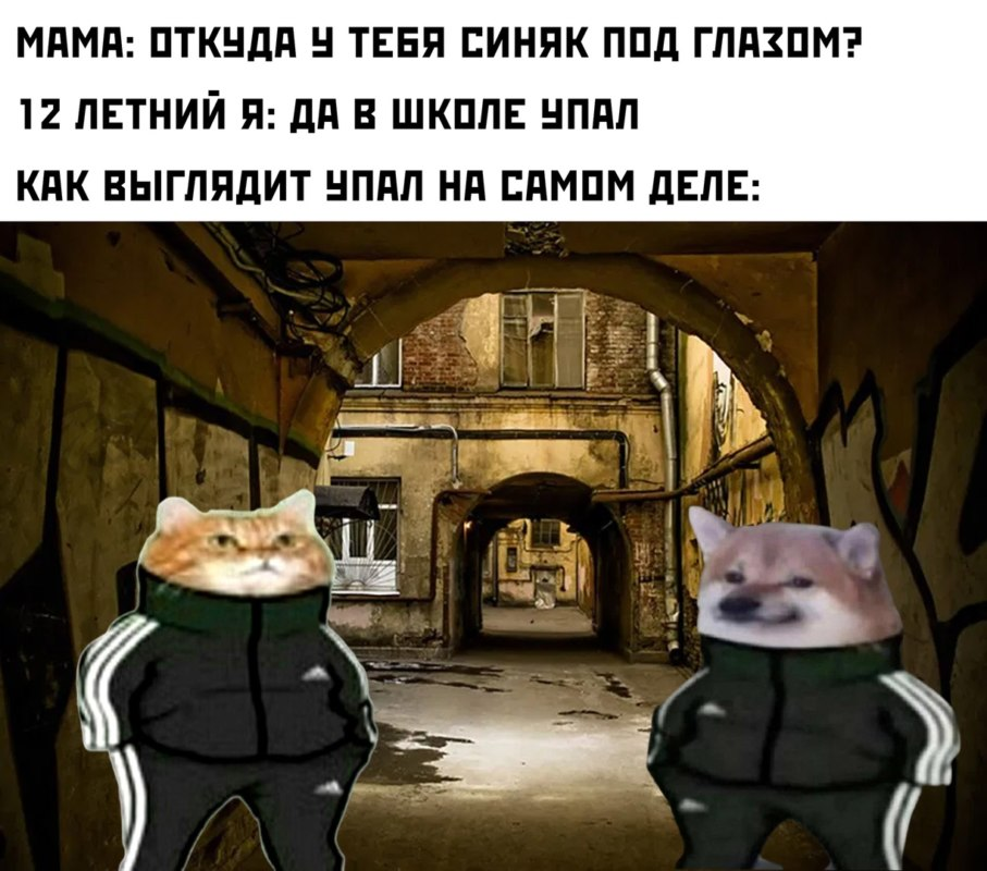 кошка и собака в костюме адидас