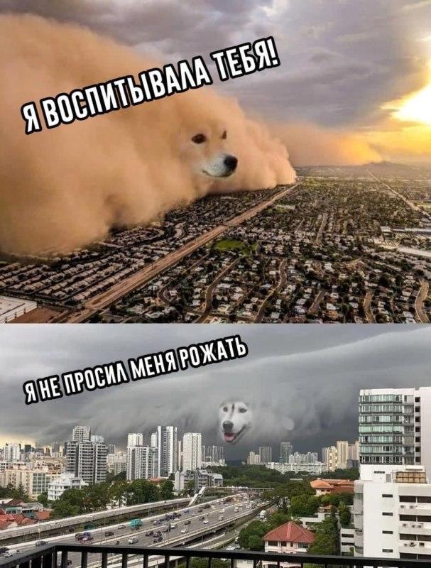 Песчаная буря с лицом собаки