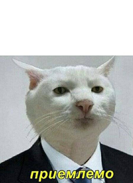 кот приемлемо мем