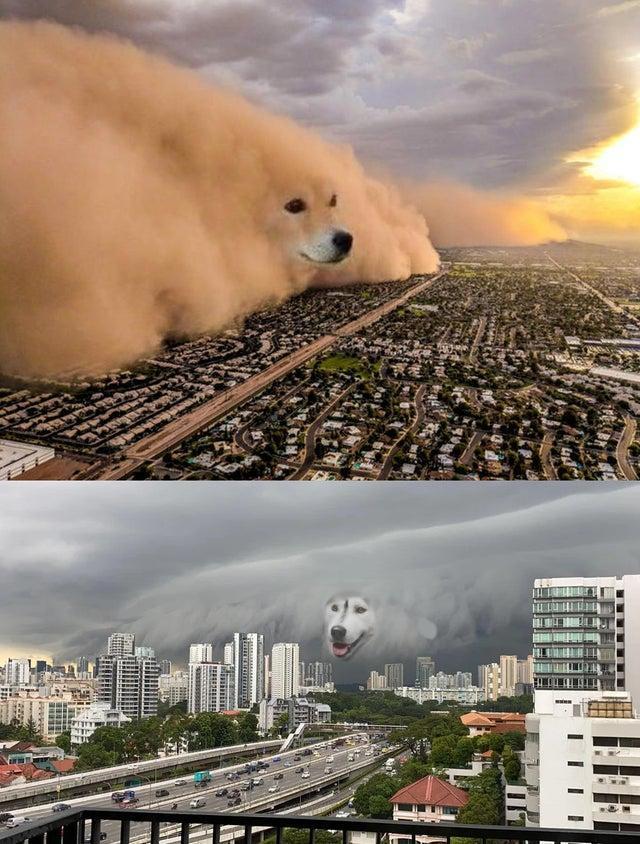 песчаная буря мем
