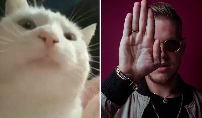 Качающая головой кошка из мема Vibing Cat оказалась глухой