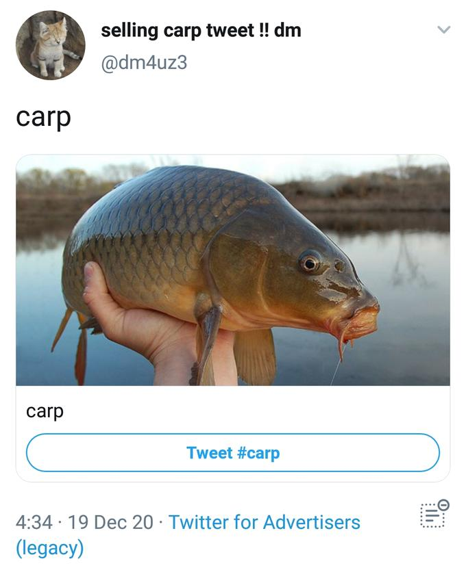 carp meme