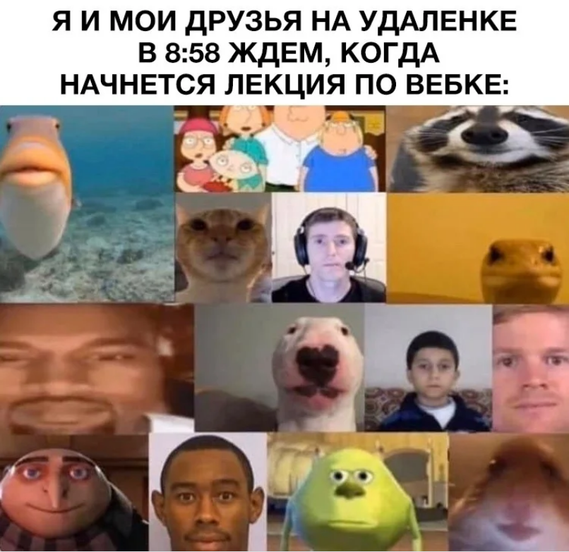мемы про зум