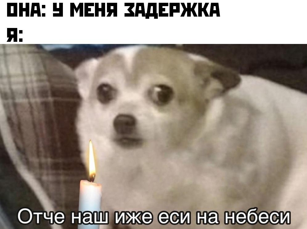 отче наш иже еси на небеси мем собака