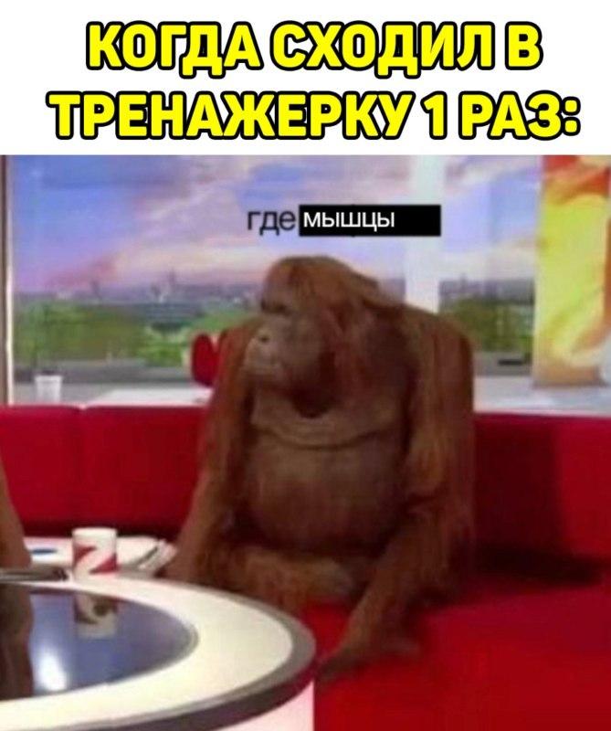 Обезьяны за столом / Where Banana