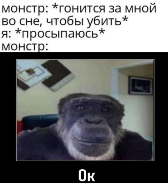 обезьяна без ушей