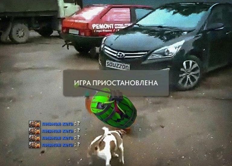Собака и кега