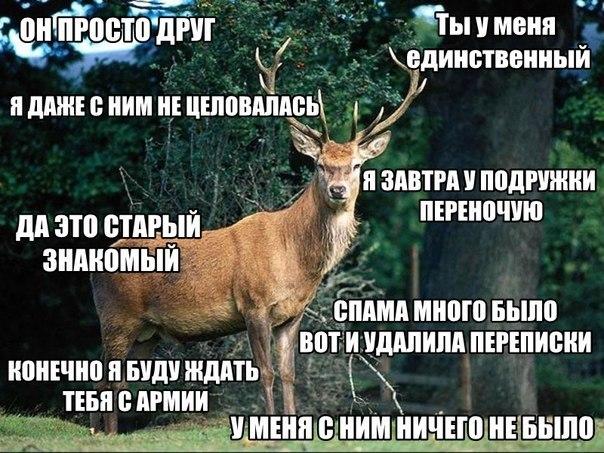 наивный олень, наивный олень вк, наивный олень мем, наивный олень фото, наивный олень картинки