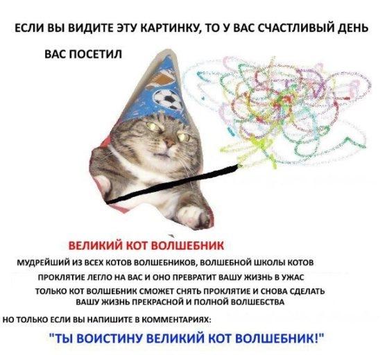 вжух, кот вжух, кот-волшебник,