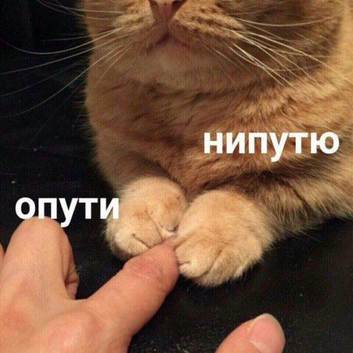 опути непутю шаблон, опути непутю мем, кот держится за палец, мем опути непутю оригинал, опути непутю оригинал