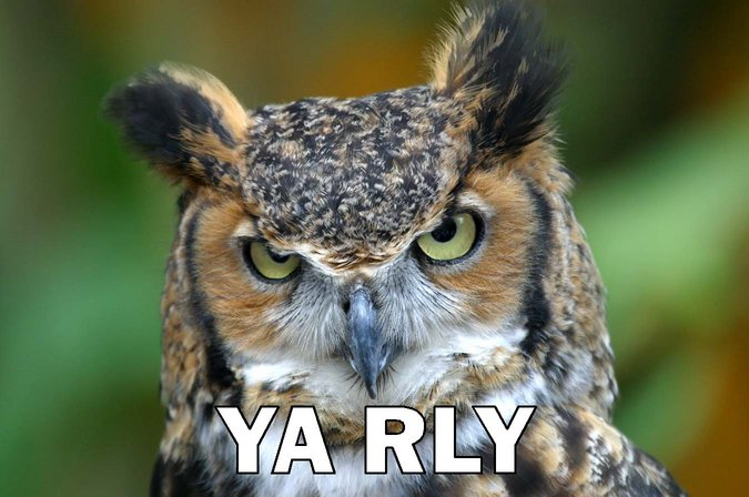 O RLY? (удивленная сова)