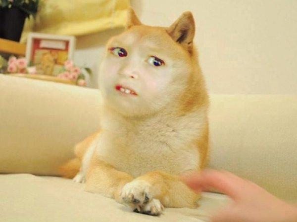 chloe doge