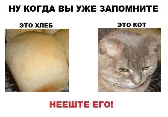 кот не хлеб