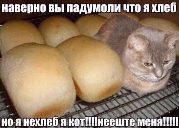 нееште меня я кот
