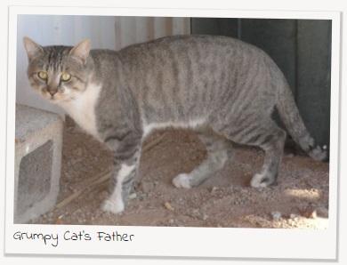 родители Grumpy cat, родители сердитого котика, почему Grumpy cat так выглядит, почему грампи кэт так выглядит, почему сердитый котик так выглядит, почему у сердитого котика такая морда, грампи кэт, грампи кет, Tardar Sauce, tard, tartar sauce, grumpy cat, sad cat. угрюмый кот, сердитый кот, злой кот, печальный кот, сердитый котик, мем с котом, угрюмый кот мем, откуда мем угрюмый кот, откуда мем сердитый кот