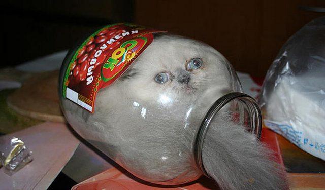 подумой кот