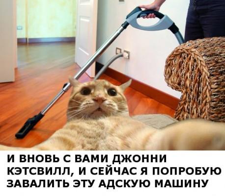 рыжий кот, рыжий кот мем, мем рыжий кот, мем с рыжим котом, откуда мем рыжий кот, откуда мем с рыжим котом, джонни кэтсвилл, джони кэтсвилл, джонни кэтсвил, джони кэтсвил, джонни кетсвилл, джони кетсвилл, джонни кетсвил, джони кетсвил, мем джонни кэтсвилл, мем джони кэтсвилл, мем джонни кэтсвил, мем джони кэтсвил, джонни кэтсвилл мем, джони кэтсвилл мем, джонни кэтсвил мем, джони кэтсвил мем, кот блогер мем, мем кот-блогер, кот-блогер мем, мем кот блогер, чудаки, джонни ноксвилл, почему джонни кэтсвилл, почему мем называется джонни кэтсвилл, джонни кэтсвилл оригинал, джонни кэтсвилл шаблон, джонни кэтсвилл приколы, приколы джонни кэтсвилл, джонни кэтсвилл происхождение мема, происхождение мема джонни кэтсвилл, Johnny Knoxville, джонни ноксвилл, кого пародирует джонни кэтсвилл, jackass, чудаки