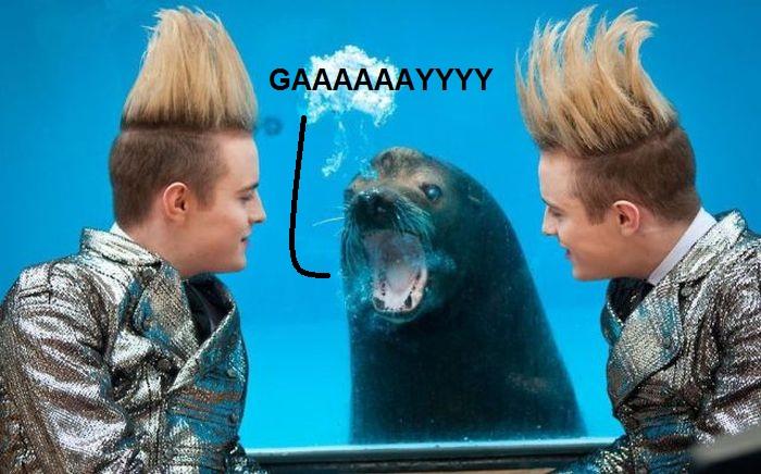 homophobic-seal